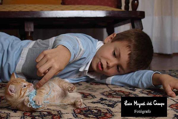 Book en domicilio de niño con gato